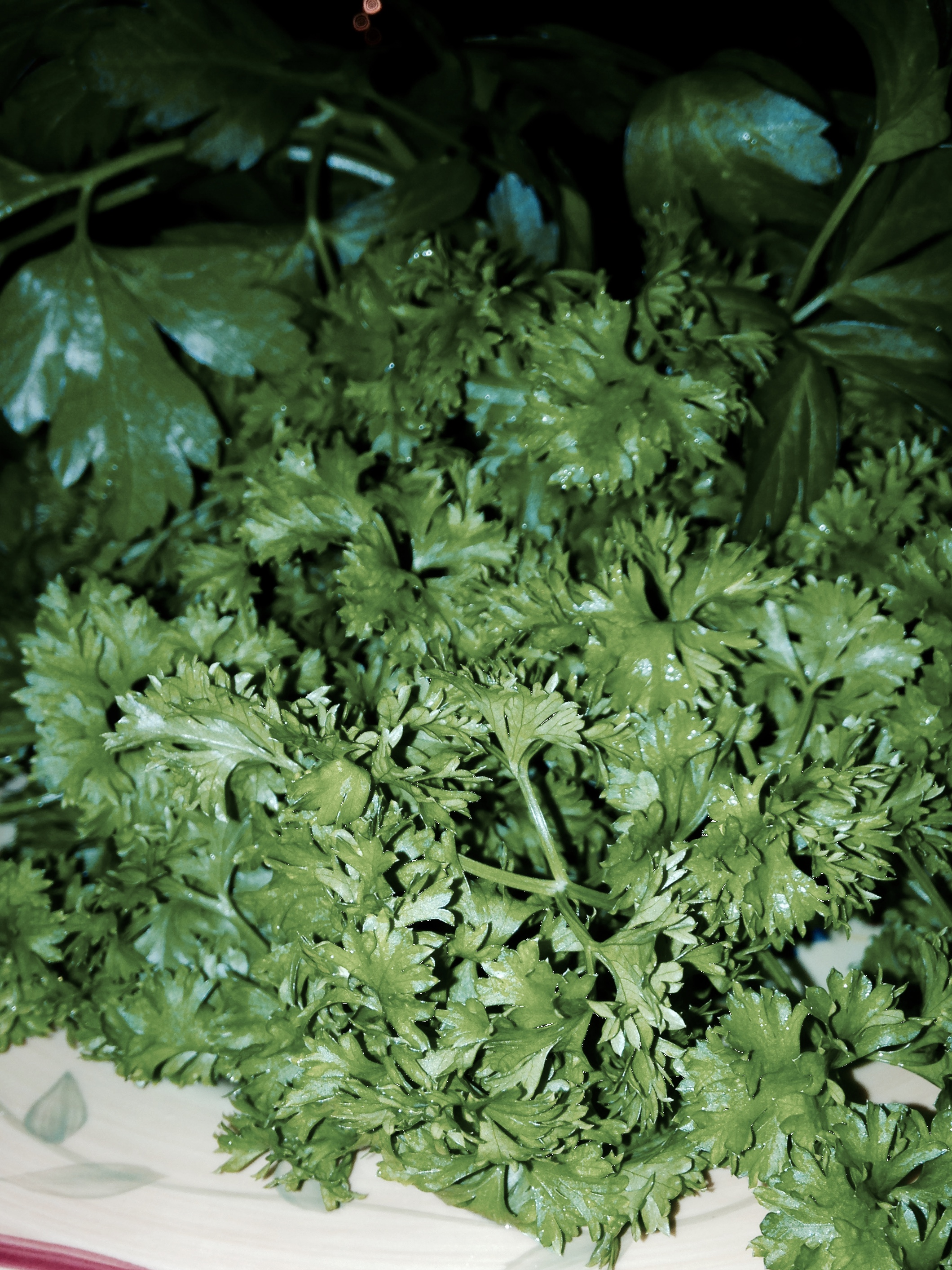 Plant of the Month – Parsley