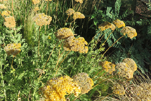 Preserving Yarrow
