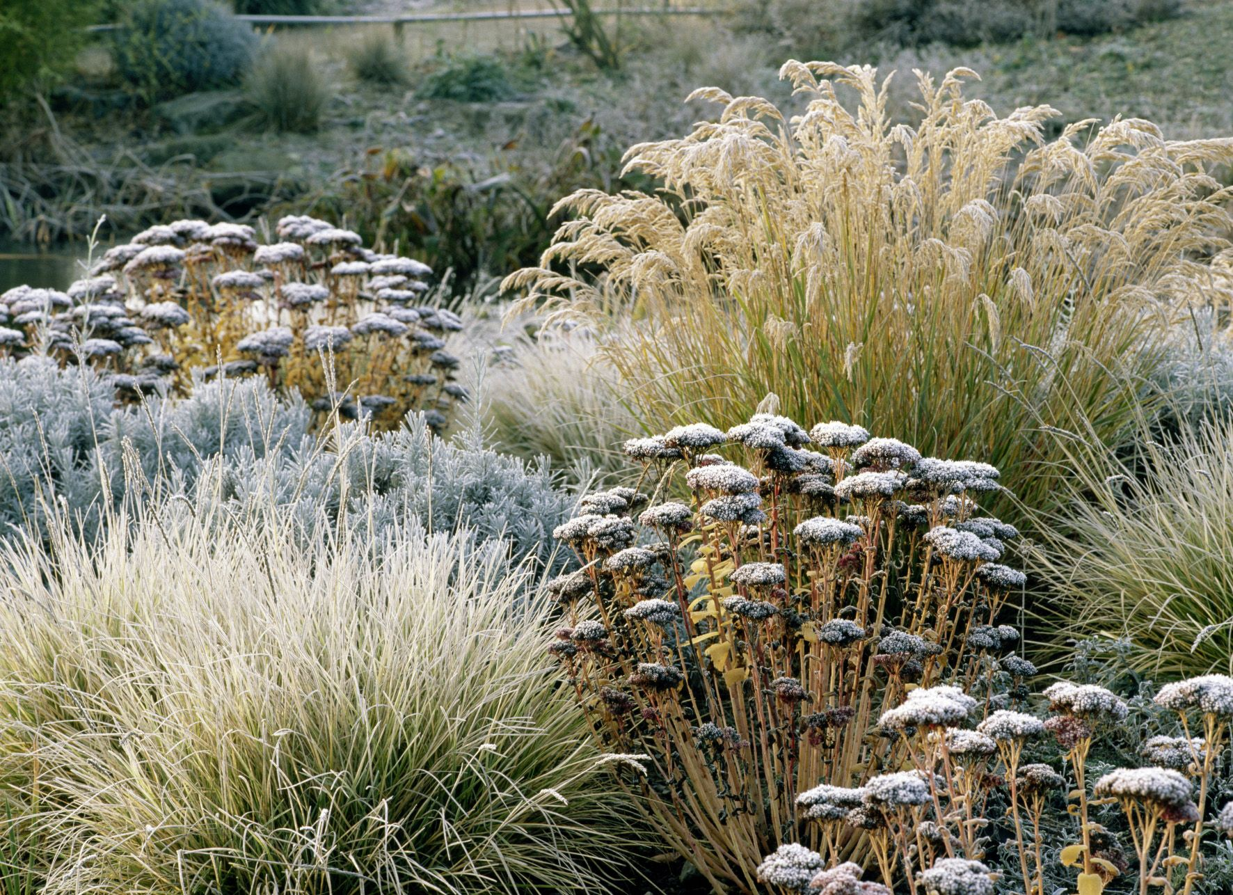 Landscapes Need Irrigation in Winter