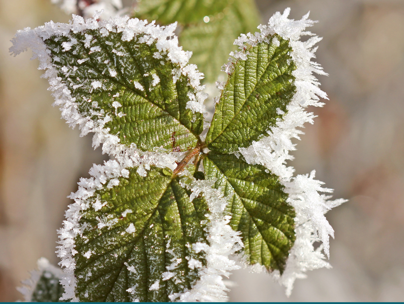 Southwest Yard & Garden – How Frost Affects Plants: The Champs vs. The Wimps