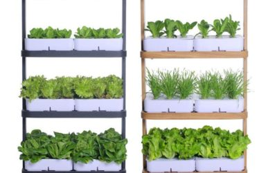 HYDROPONIC 101 GROWING FOOD AT HOME