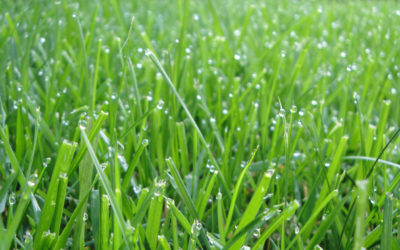 Southwest Yard & Garden – Turfgrass Water Requirements and Water Conservation