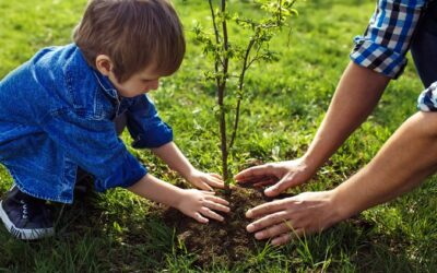 How to Plant Your Trees