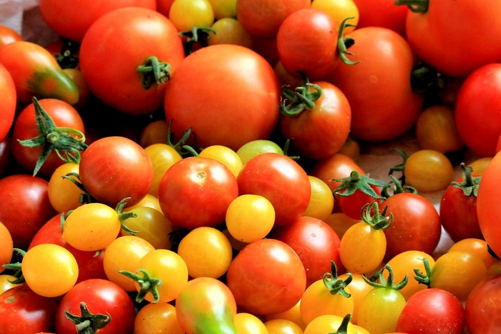 Start Early for a Bumper Crop of Tomatoes