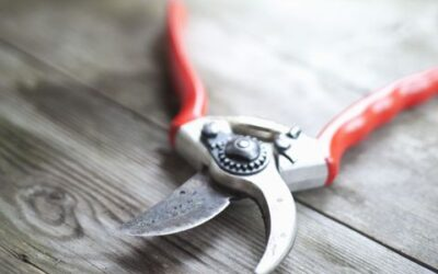 How to Clean & Sharpen Your Handheld Pruners
