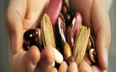 It's Never Too Early To Start Seed Saving