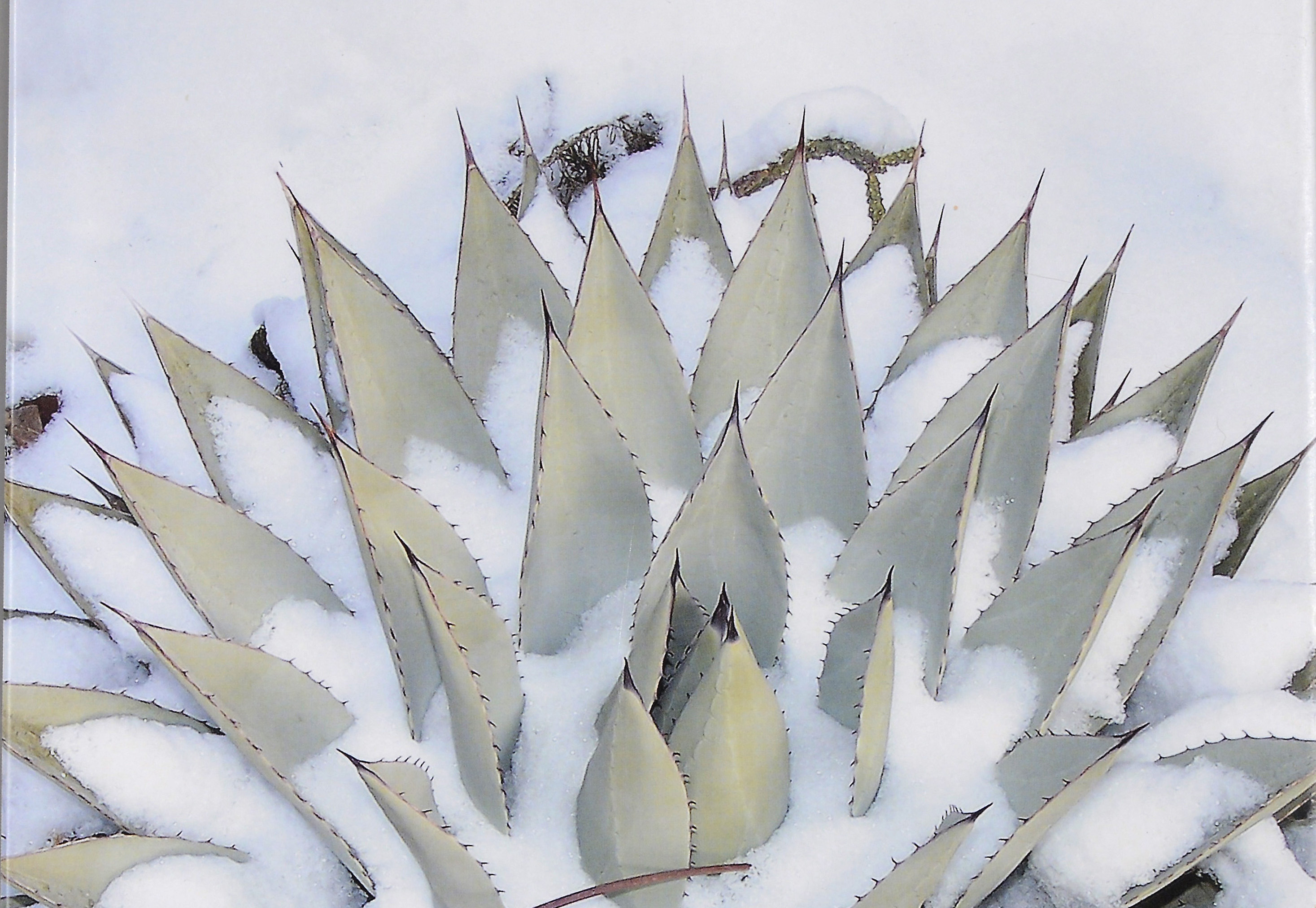 Book Review – Cacti & Succulents for Cold Climates