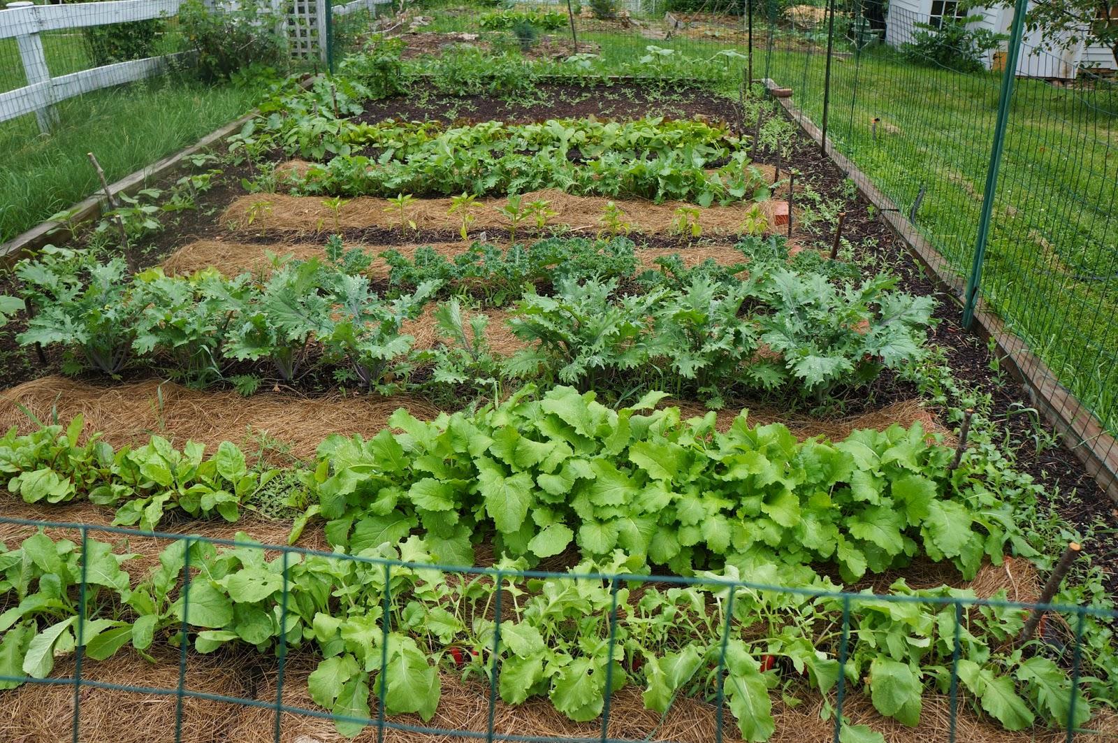 Back Yard Farming
