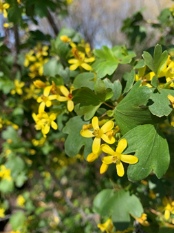 Southwest Yard & Garden –  Hummingbirds are BACK