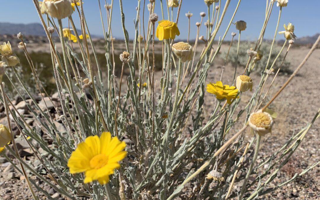 Southwest Yard & Garden –  Heat-Loving Flowers for Color All Summer